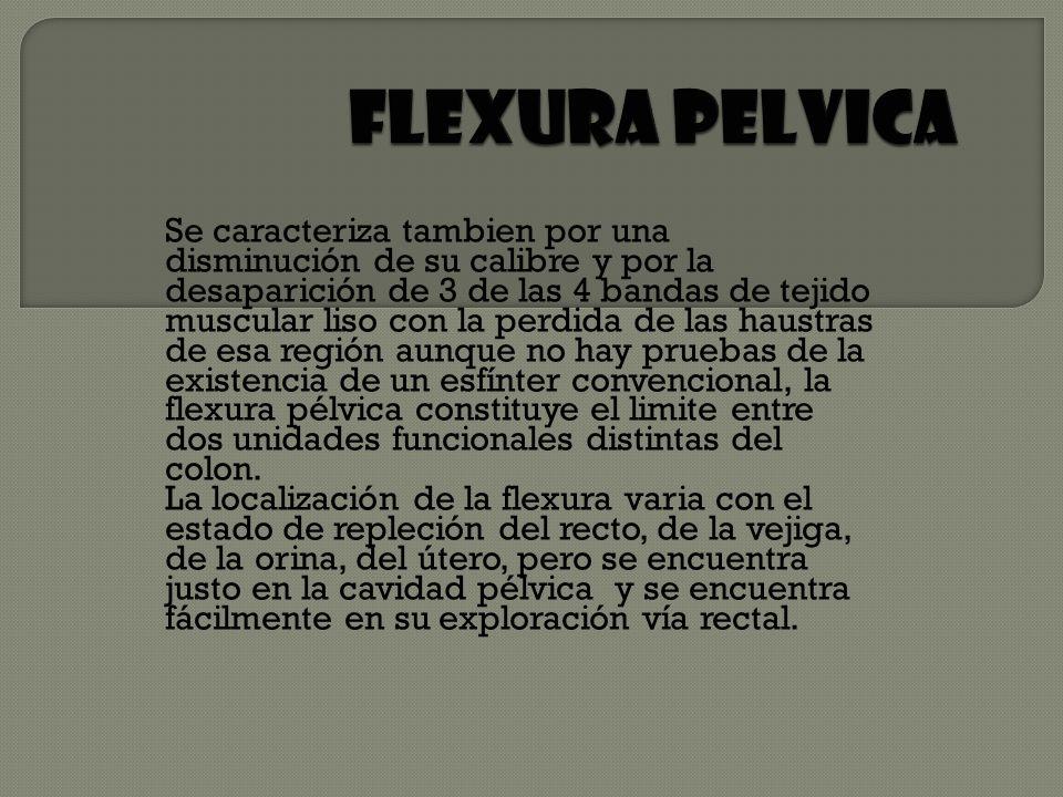 FLEXURA PELVICA
