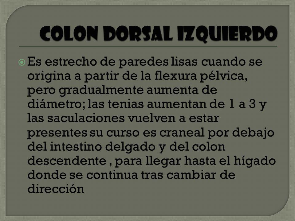 COLON DORSAL IZQUIERDO