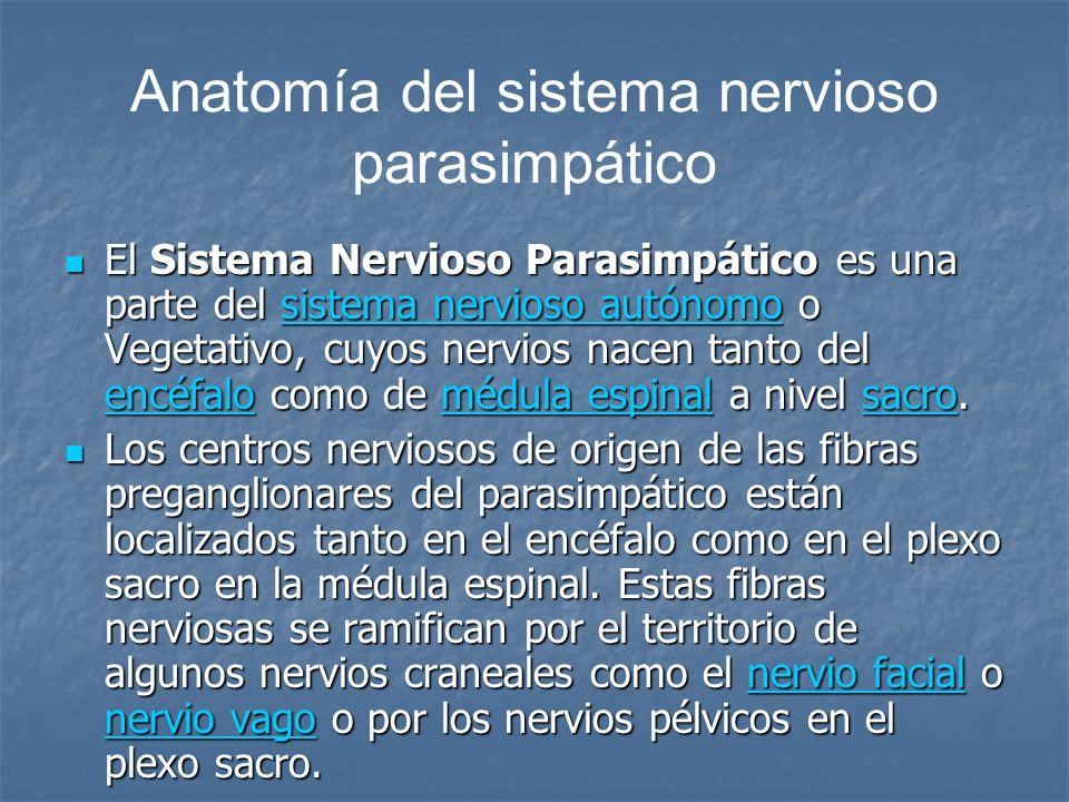 Anatomía del sistema nervioso parasimpático