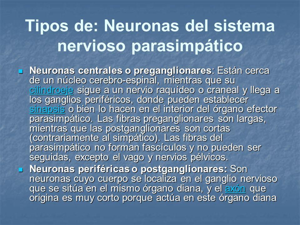 Tipos de: Neuronas del sistema nervioso parasimpático