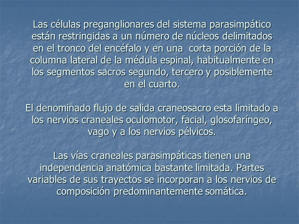 Las células preganglionares del sistema parasimpático están restringidas a un número de núcleos delimitados en el tronco del encéfalo y en una corta porción de la columna lateral de la médula espinal, habitualmente en los segmentos sacros segundo, tercero y posiblemente en el cuarto.