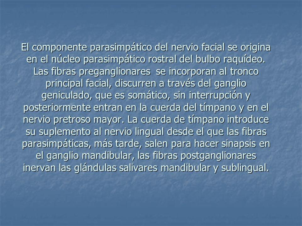 El componente parasimpático del nervio facial se origina en el núcleo parasimpático rostral del bulbo raquídeo.