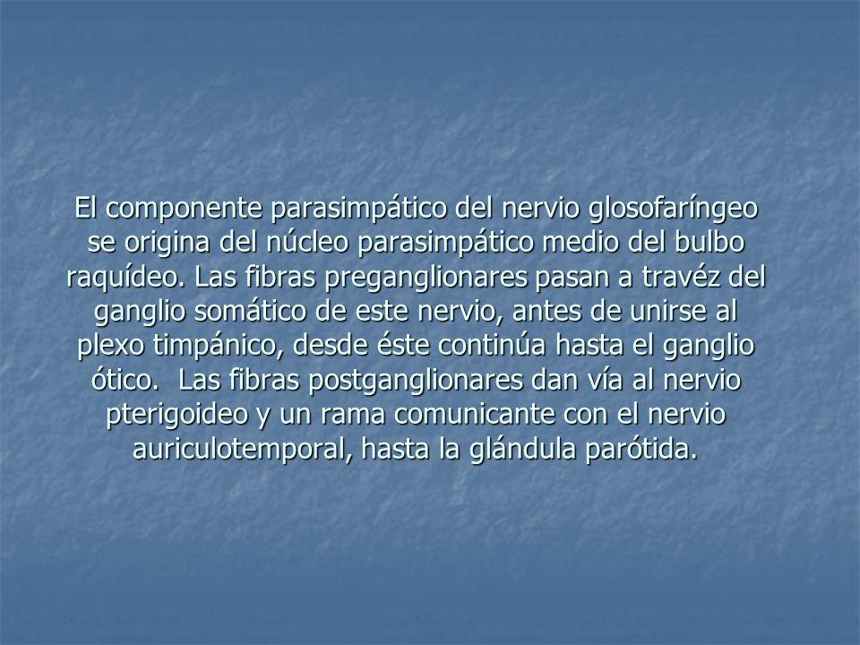El componente parasimpático del nervio glosofaríngeo se origina del núcleo parasimpático medio del bulbo raquídeo.