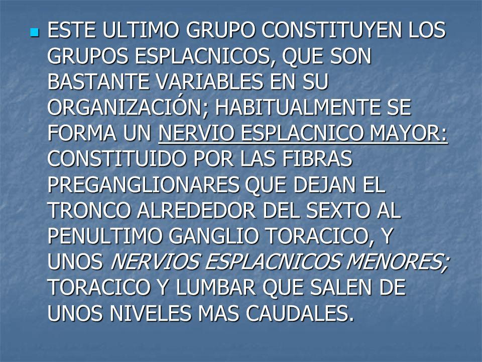ESTE ULTIMO GRUPO CONSTITUYEN LOS GRUPOS ESPLACNICOS, QUE SON BASTANTE VARIABLES EN SU ORGANIZACIÓN; HABITUALMENTE SE FORMA UN NERVIO ESPLACNICO MAYOR: CONSTITUIDO POR LAS FIBRAS PREGANGLIONARES QUE DEJAN EL TRONCO ALREDEDOR DEL SEXTO AL PENULTIMO GANGLIO TORACICO, Y UNOS NERVIOS ESPLACNICOS MENORES; TORACICO Y LUMBAR QUE SALEN DE UNOS NIVELES MAS CAUDALES.