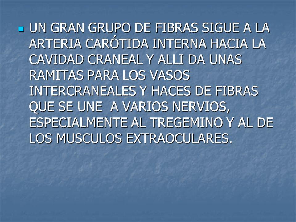 UN GRAN GRUPO DE FIBRAS SIGUE A LA ARTERIA CARÓTIDA INTERNA HACIA LA CAVIDAD CRANEAL Y ALLI DA UNAS RAMITAS PARA LOS VASOS INTERCRANEALES Y HACES DE FIBRAS QUE SE UNE A VARIOS NERVIOS, ESPECIALMENTE AL TREGEMINO Y AL DE LOS MUSCULOS EXTRAOCULARES.