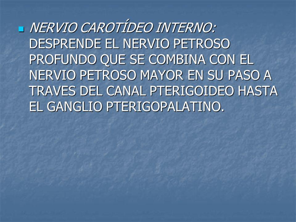 NERVIO CAROTÍDEO INTERNO: DESPRENDE EL NERVIO PETROSO PROFUNDO QUE SE COMBINA CON EL NERVIO PETROSO MAYOR EN SU PASO A TRAVES DEL CANAL PTERIGOIDEO HASTA EL GANGLIO PTERIGOPALATINO.