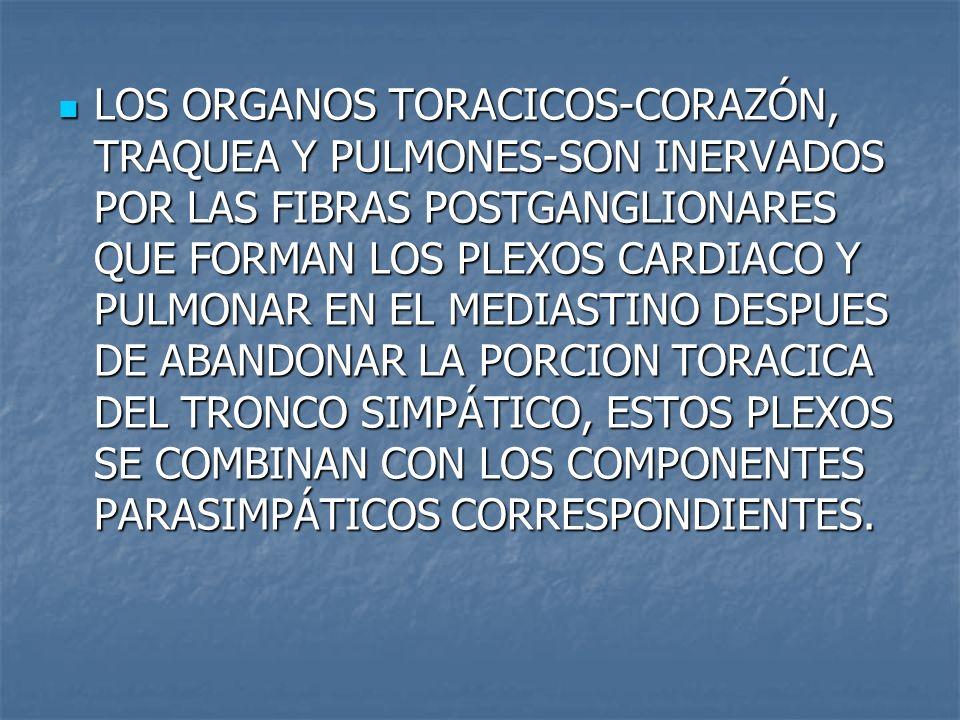 LOS ORGANOS TORACICOS-CORAZÓN, TRAQUEA Y PULMONES-SON INERVADOS POR LAS FIBRAS POSTGANGLIONARES QUE FORMAN LOS PLEXOS CARDIACO Y PULMONAR EN EL MEDIASTINO DESPUES DE ABANDONAR LA PORCION TORACICA DEL TRONCO SIMPÁTICO, ESTOS PLEXOS SE COMBINAN CON LOS COMPONENTES PARASIMPÁTICOS CORRESPONDIENTES.