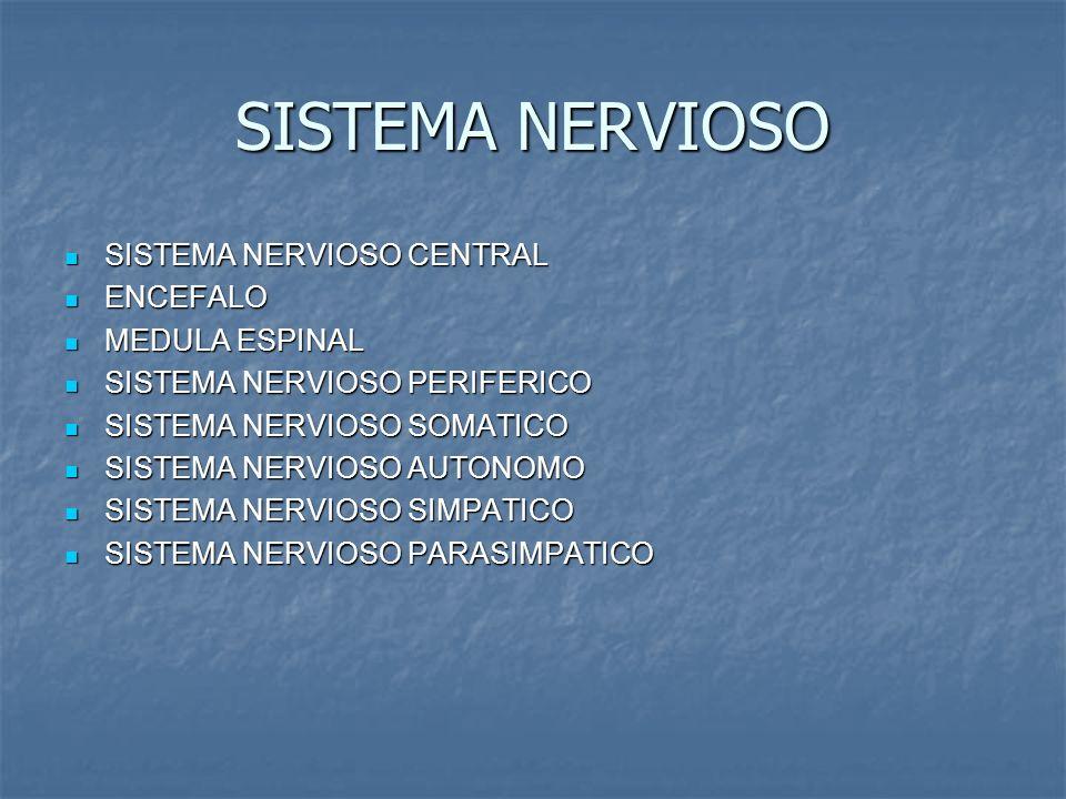 SISTEMA NERVIOSO SISTEMA NERVIOSO CENTRAL ENCEFALO MEDULA ESPINAL