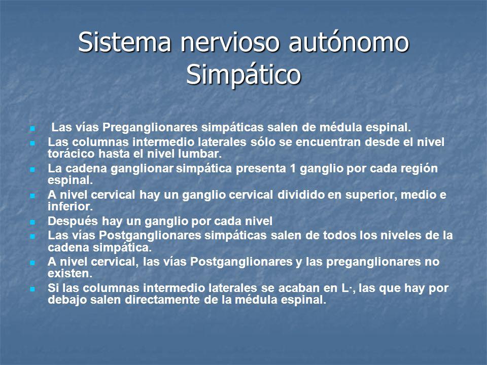 Sistema nervioso autónomo Simpático