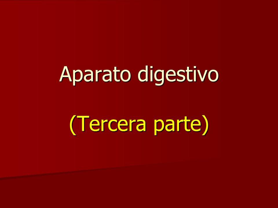 Aparato digestivo (Tercera parte) - ppt video online descargar