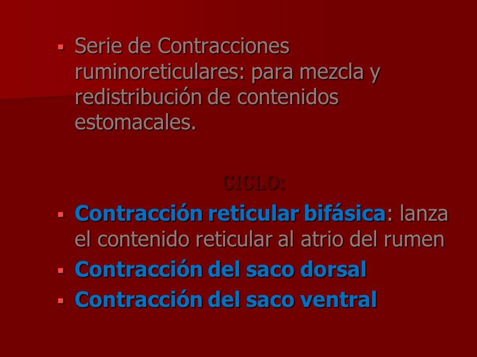 Serie de Contracciones ruminoreticulares: para mezcla y redistribución de contenidos estomacales.