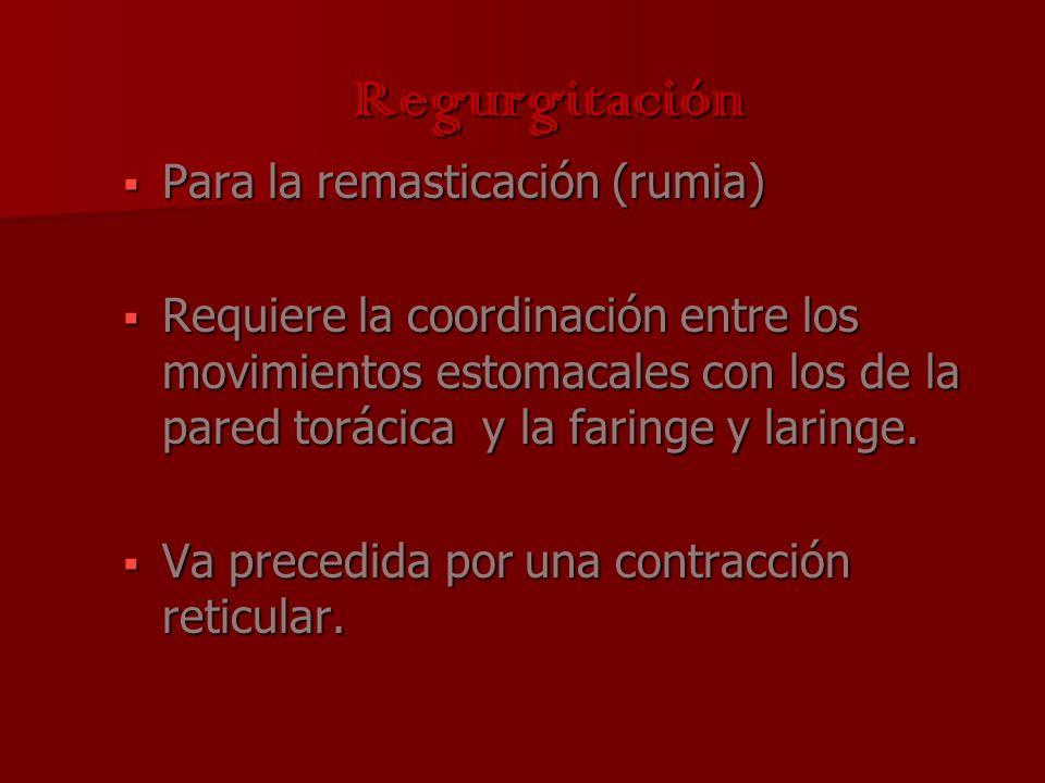 Regurgitación Para la remasticación (rumia)