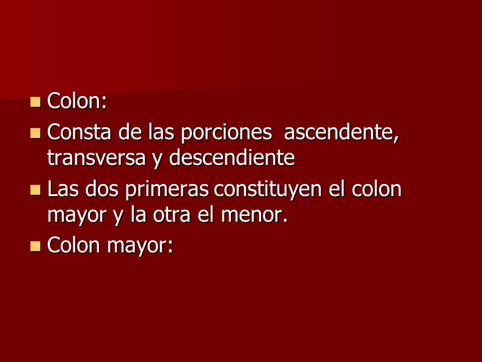 Colon:Consta de las porciones ascendente, transversa y descendiente. Las dos primeras constituyen el colon mayor y la otra el menor.