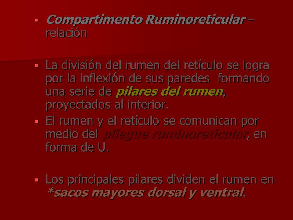 Compartimento Ruminoreticular – relación