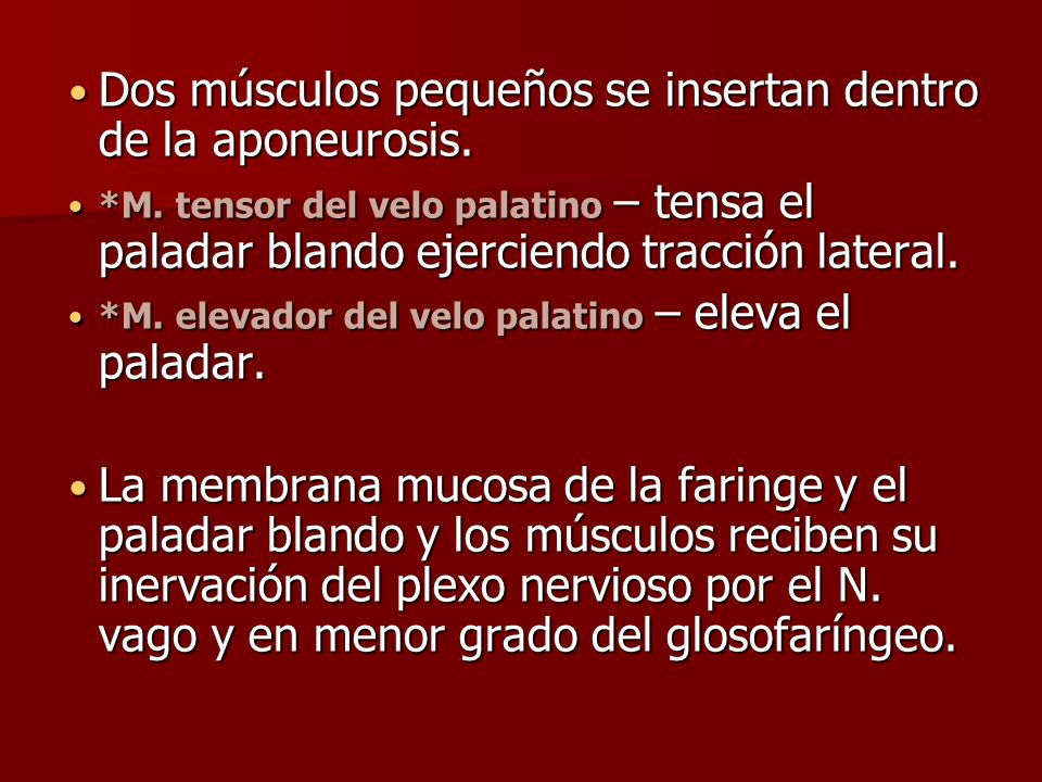 Dos músculos pequeños se insertan dentro de la aponeurosis.