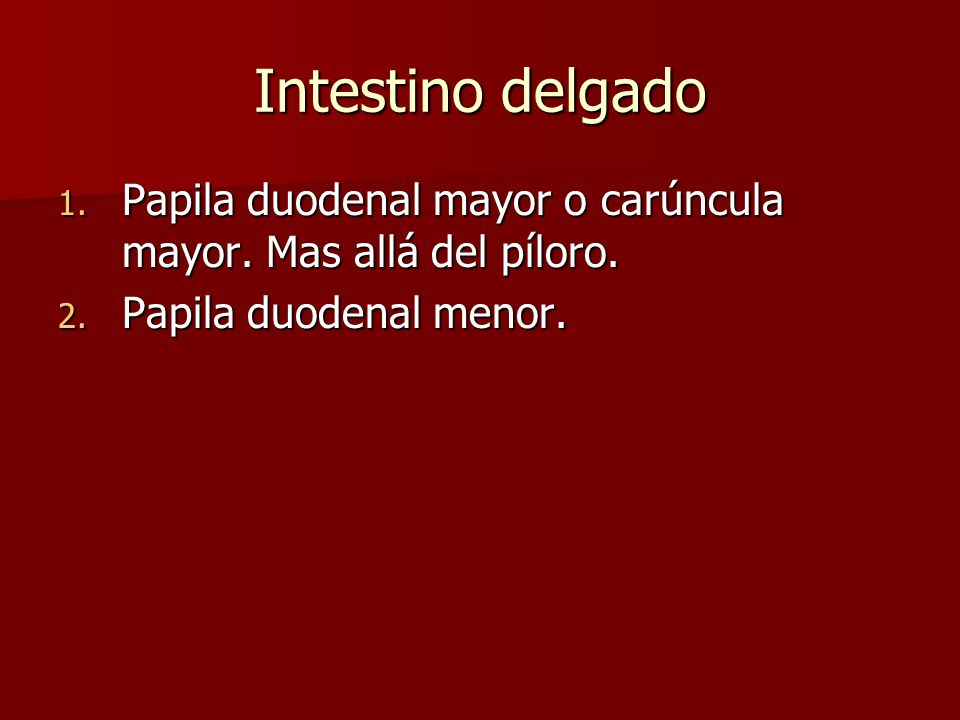 Intestino delgado Papila duodenal mayor o carúncula mayor.