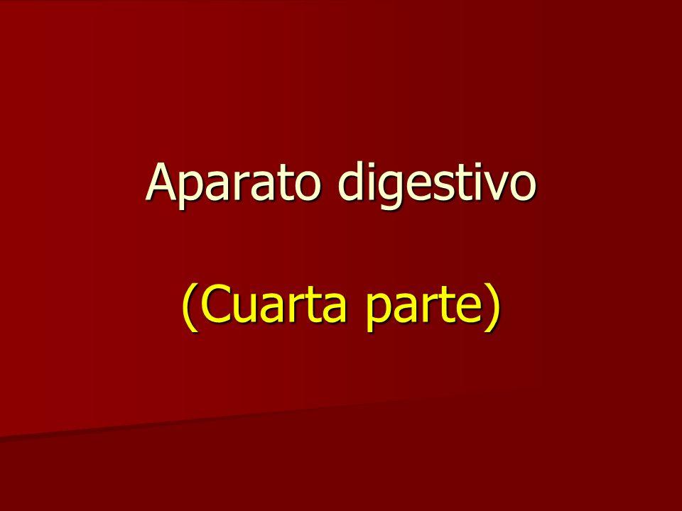 Aparato digestivo (Cuarta parte)