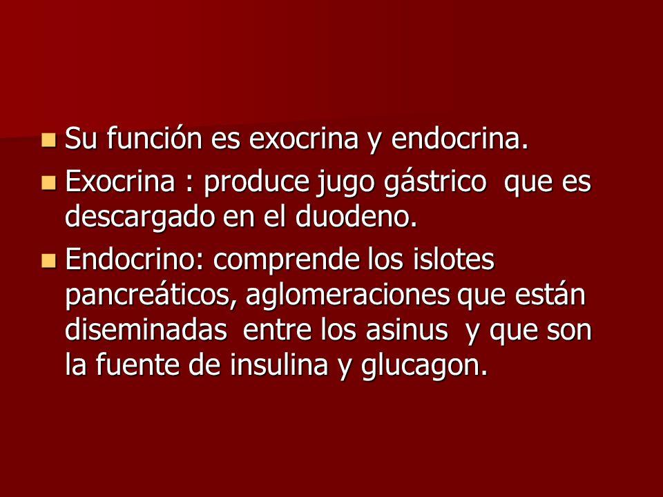 Su función es exocrina y endocrina.