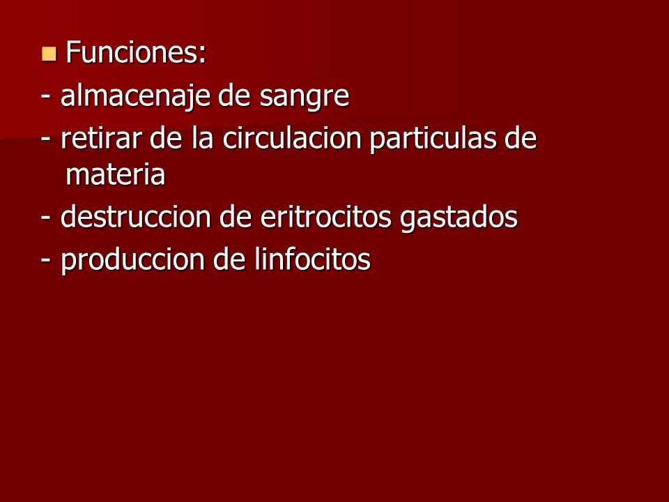 Funciones: - almacenaje de sangre. - retirar de la circulacion particulas de materia. - destruccion de eritrocitos gastados.