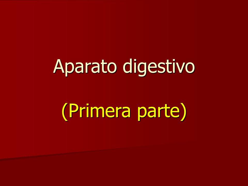 Aparato digestivo (Primera parte)
