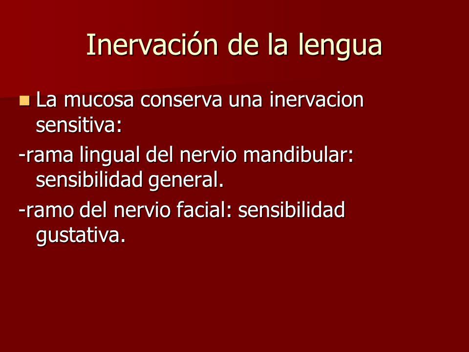 Inervación de la lengua