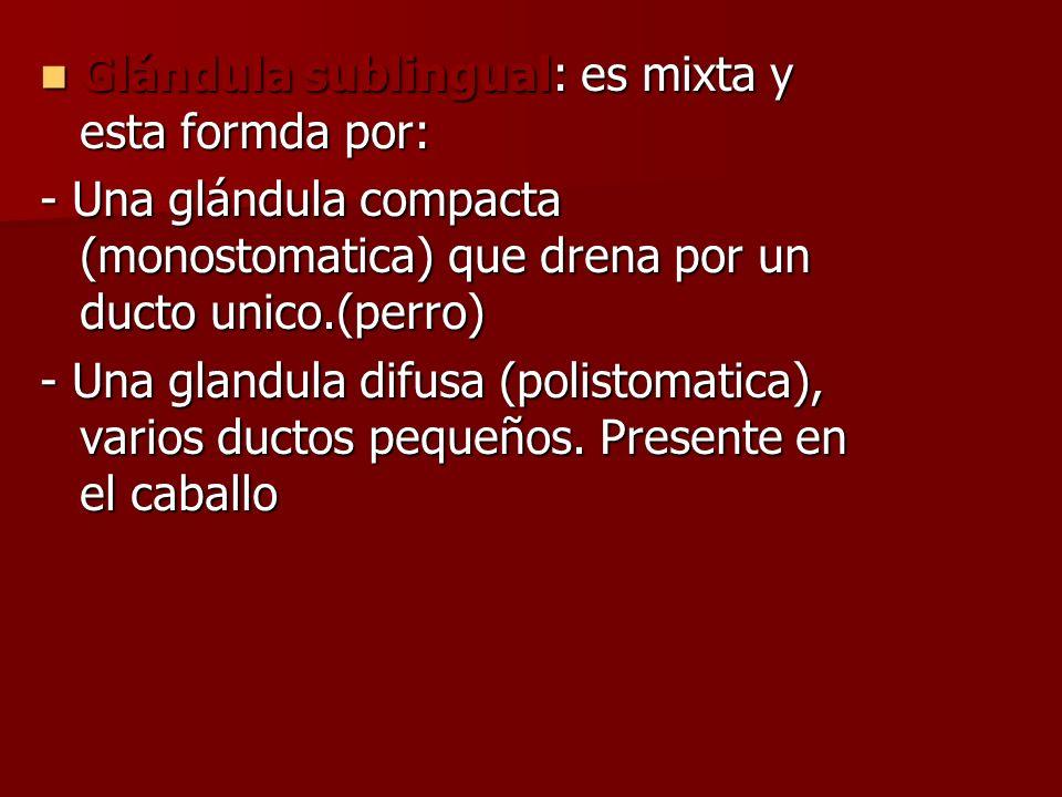 Glándula sublingual: es mixta y esta formda por: