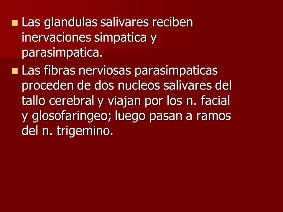 Las glandulas salivares reciben inervaciones simpatica y parasimpatica.
