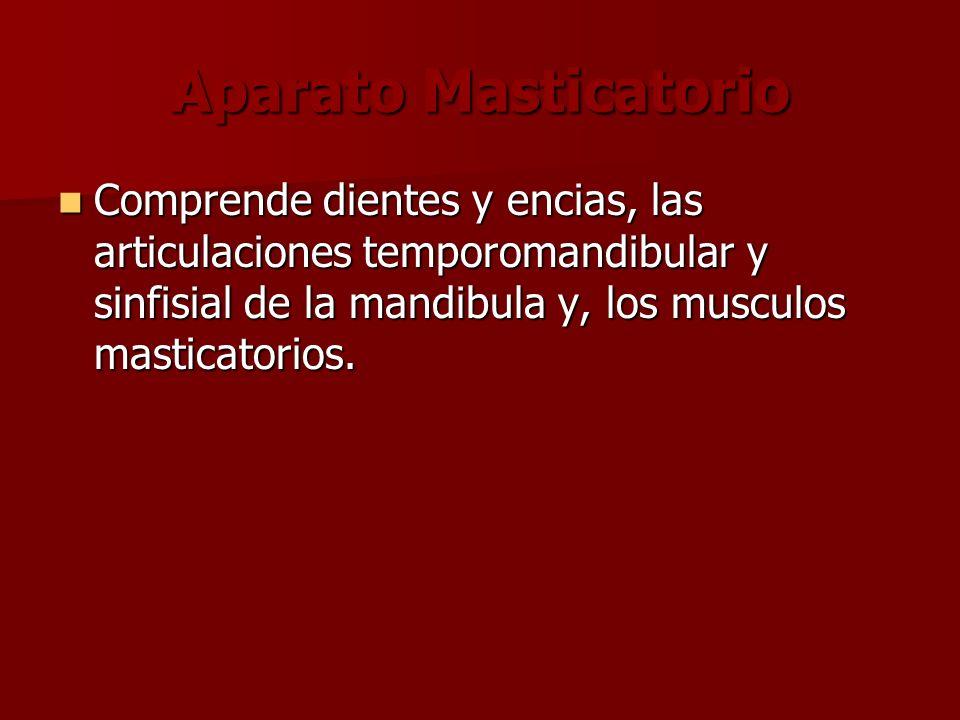 Aparato Masticatorio Comprende dientes y encias, las articulaciones temporomandibular y sinfisial de la mandibula y, los musculos masticatorios.