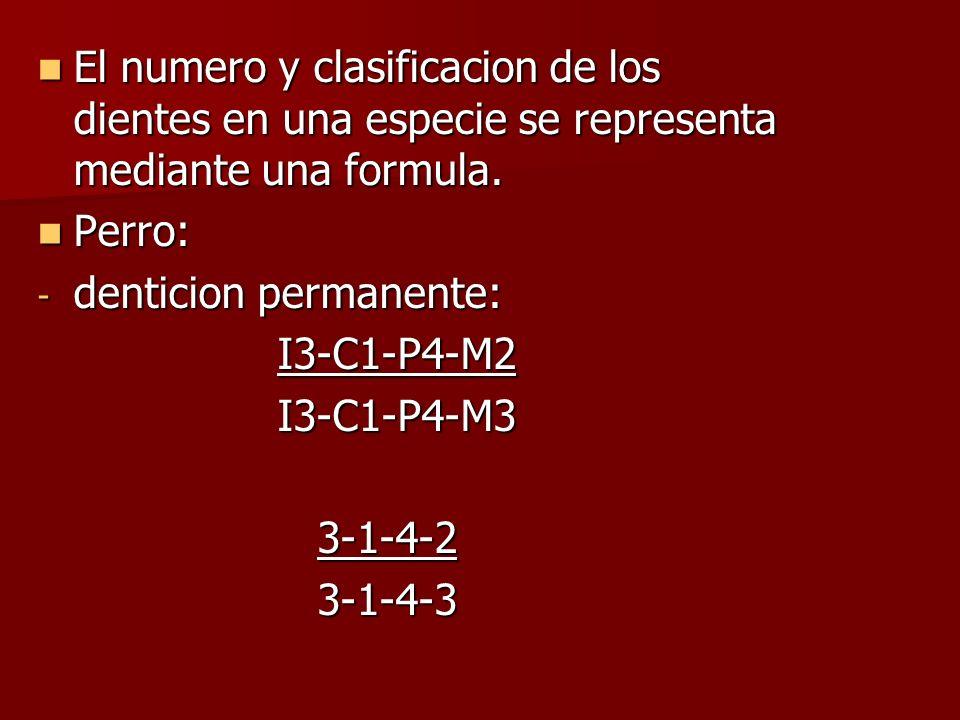 El numero y clasificacion de los dientes en una especie se representa mediante una formula.