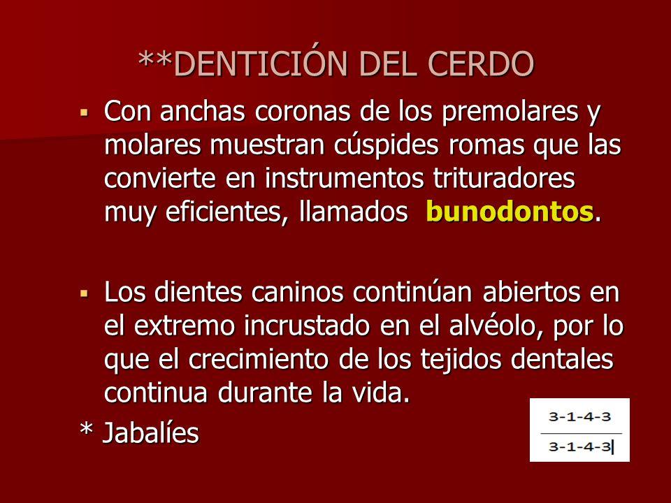 **DENTICIÓN DEL CERDO