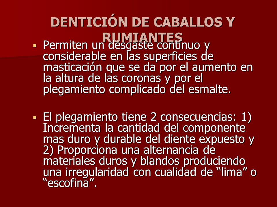 DENTICIÓN DE CABALLOS Y RUMIANTES