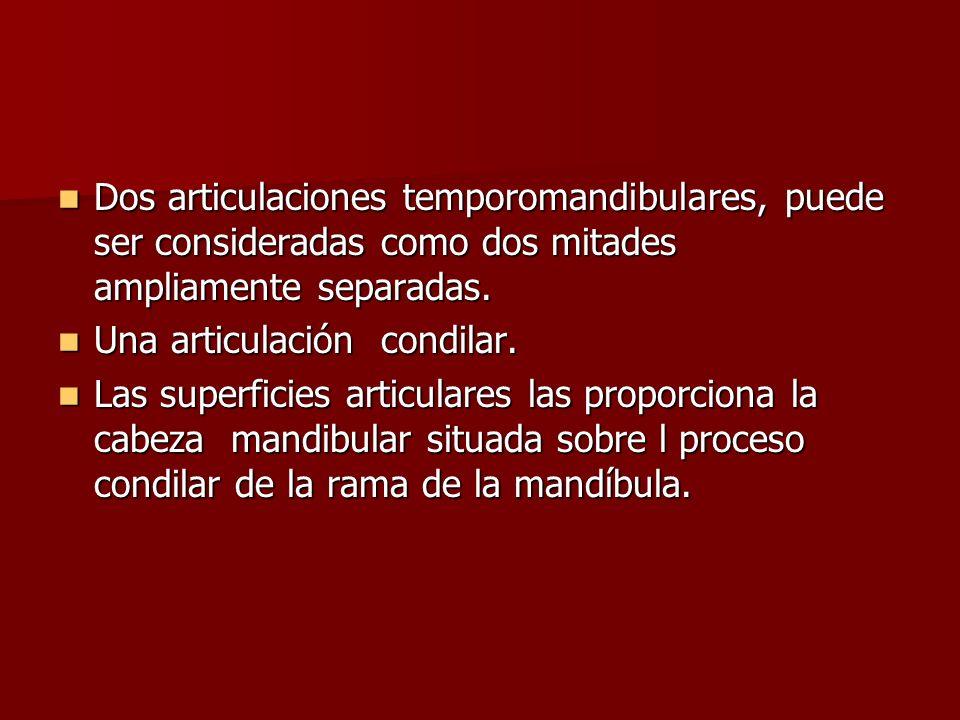 Dos articulaciones temporomandibulares, puede ser consideradas como dos mitades ampliamente separadas.
