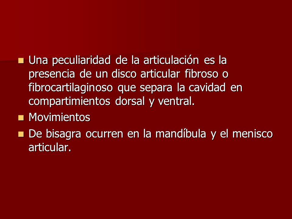 Una peculiaridad de la articulación es la presencia de un disco articular fibroso o fibrocartilaginoso que separa la cavidad en compartimientos dorsal y ventral.