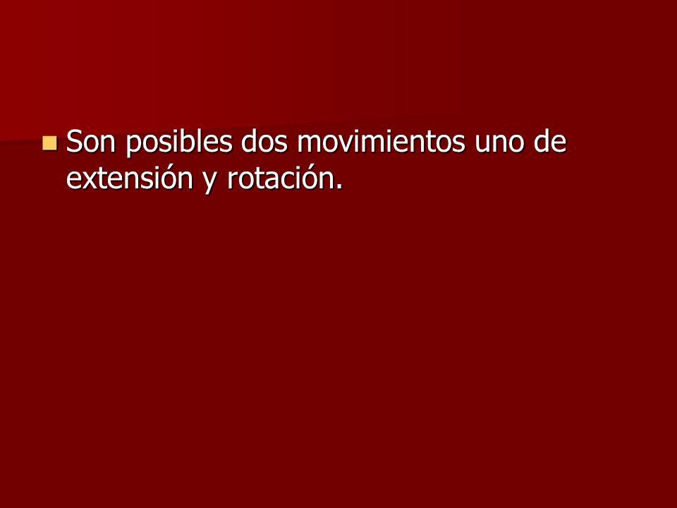 Son posibles dos movimientos uno de extensión y rotación.