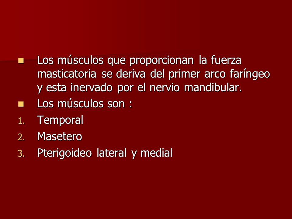 Los músculos que proporcionan la fuerza masticatoria se deriva del primer arco faríngeo y esta inervado por el nervio mandibular.