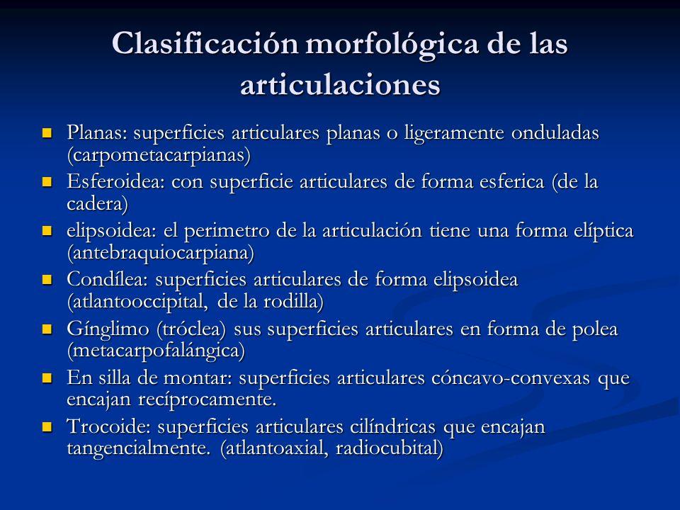 Clasificación morfológica de las articulaciones