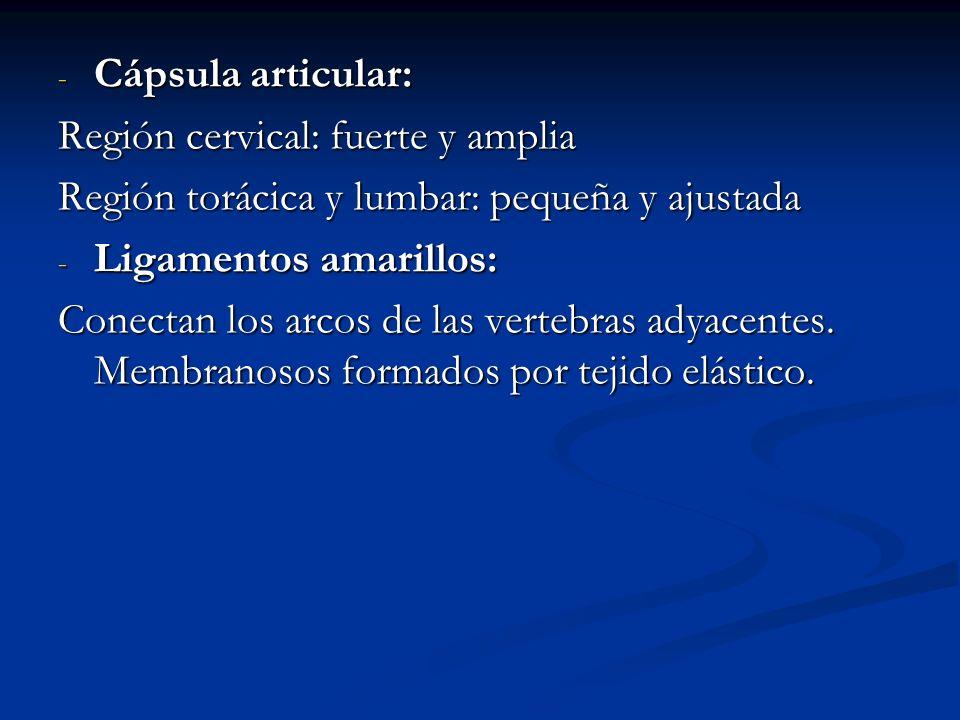 Cápsula articular:Región cervical: fuerte y amplia. Región torácica y lumbar: pequeña y ajustada. Ligamentos amarillos: