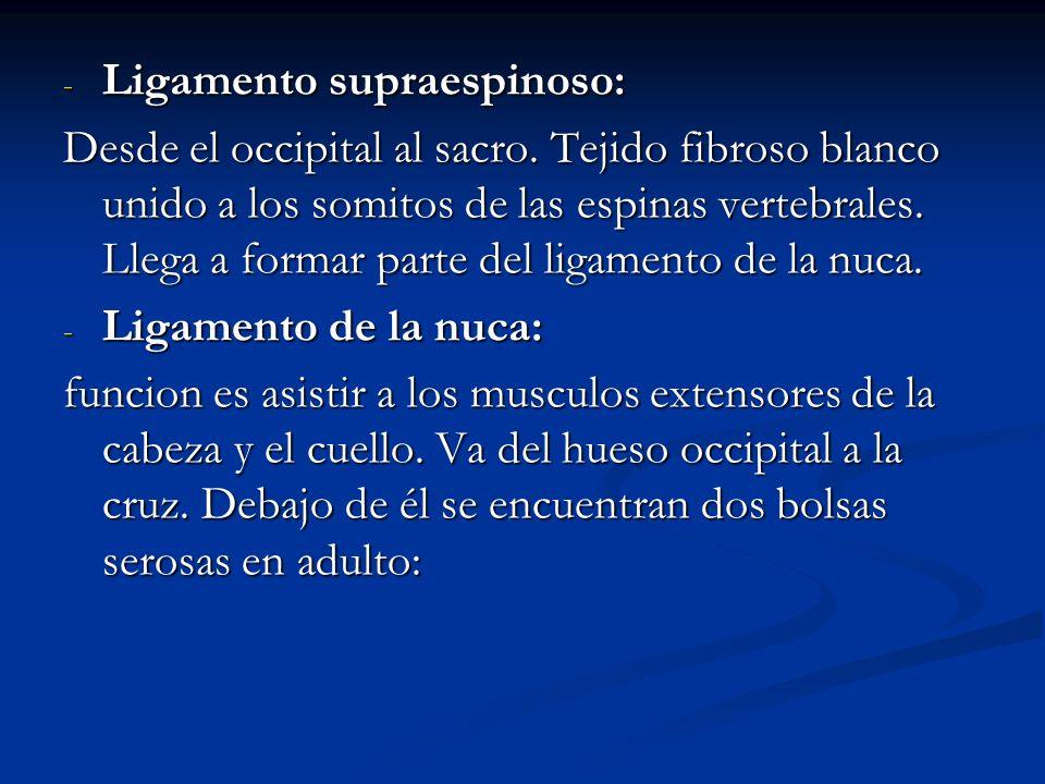 Ligamento supraespinoso: