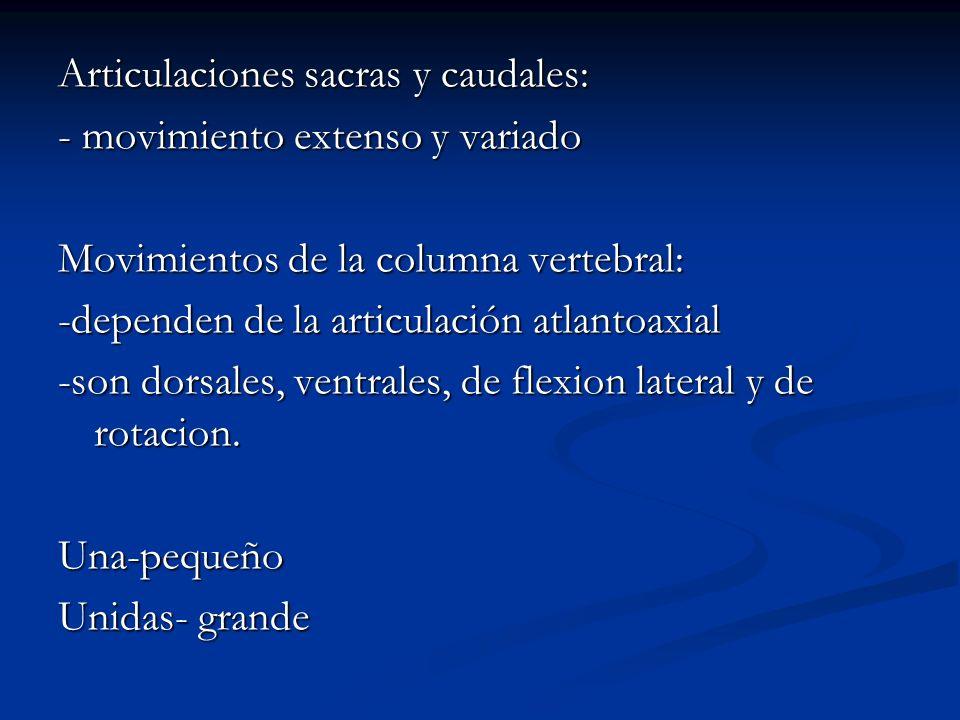 Articulaciones sacras y caudales: