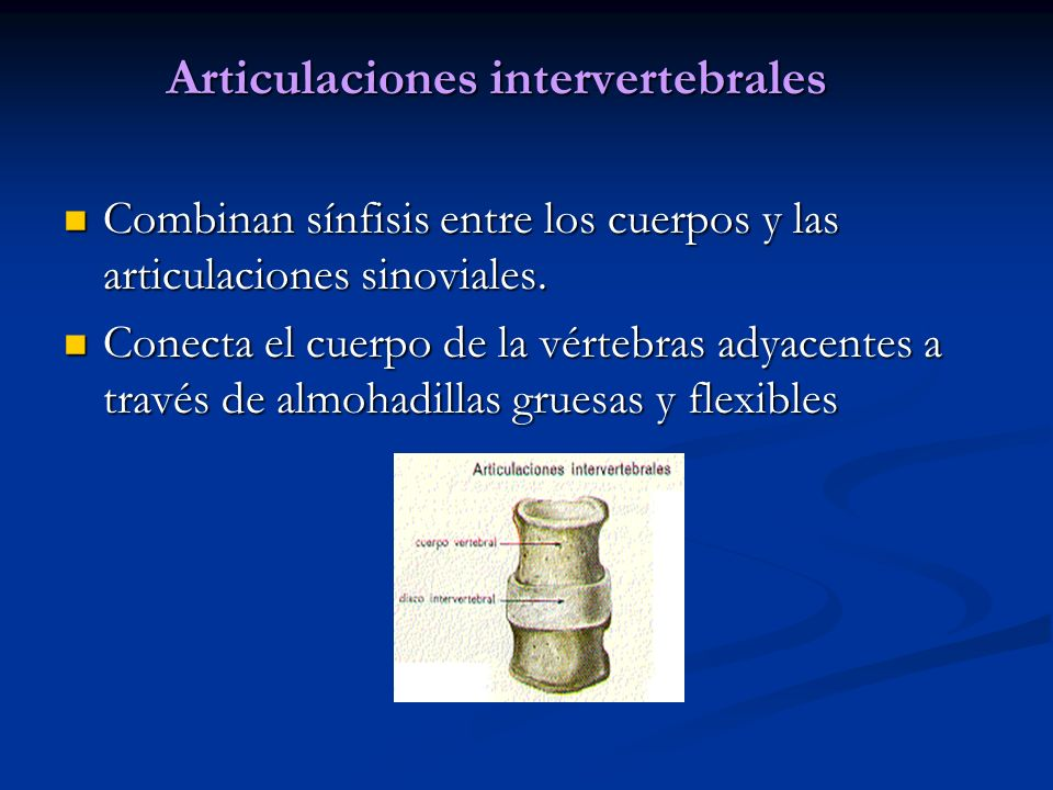 Articulaciones intervertebrales