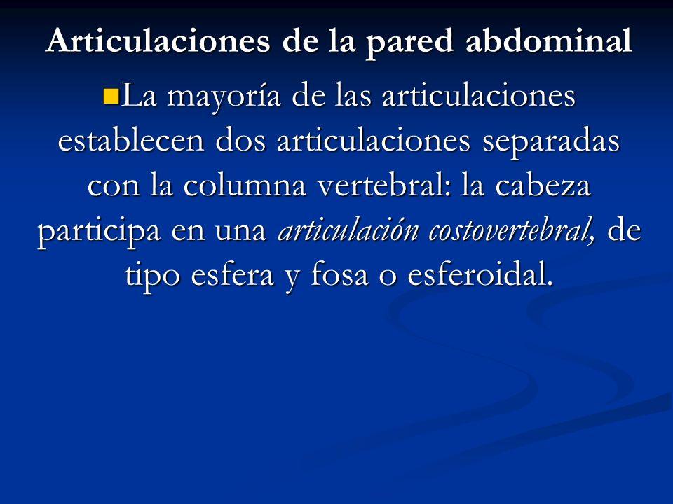 Articulaciones de la pared abdominal