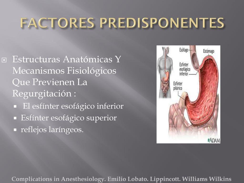 Contemporáneo Anatomía Del Esfínter Esofágico Inferior Molde ...