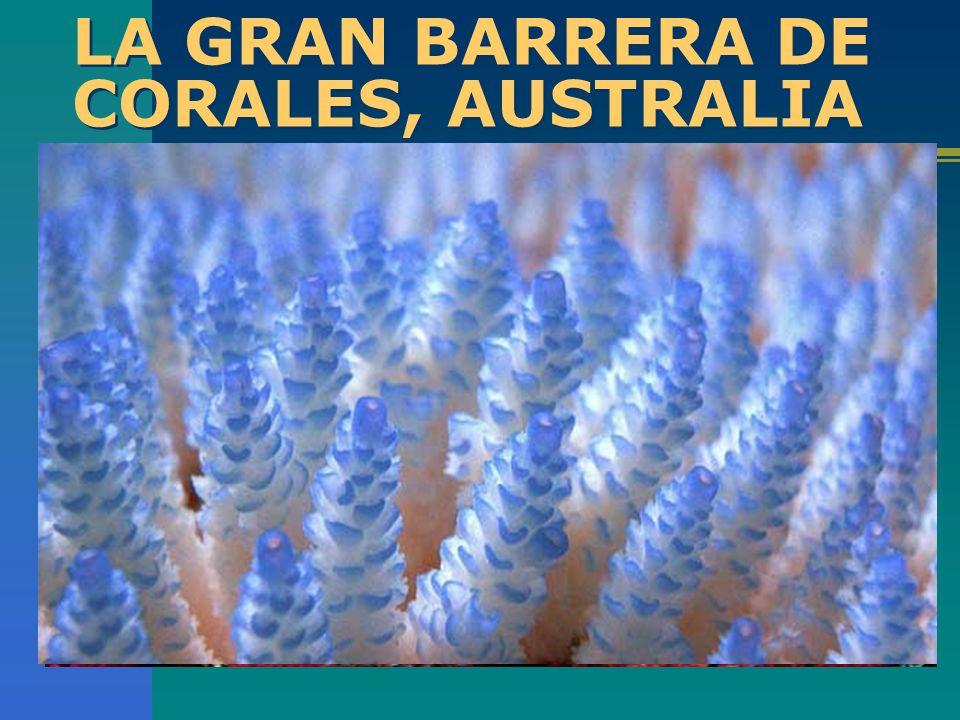 LA GRAN BARRERA DE CORALES, AUSTRALIA