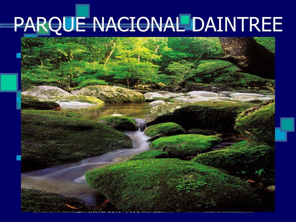 PARQUE NACIONAL DAINTREE