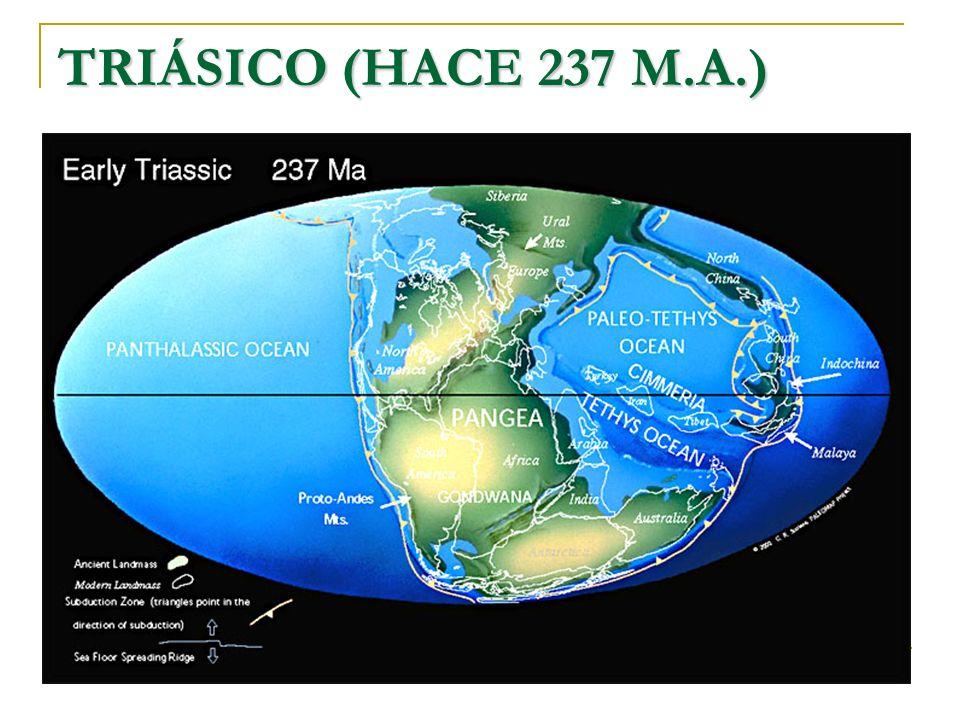 TRIÁSICO (HACE 237 M.A.)