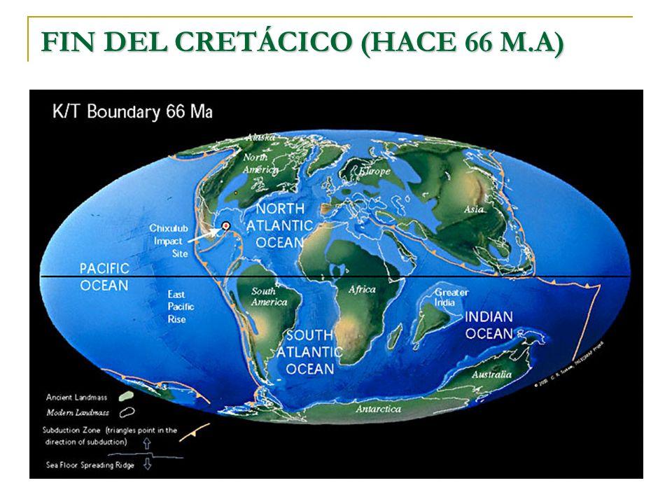 FIN DEL CRETÁCICO (HACE 66 M.A)