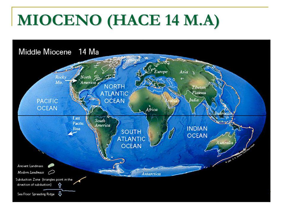 MIOCENO (HACE 14 M.A)