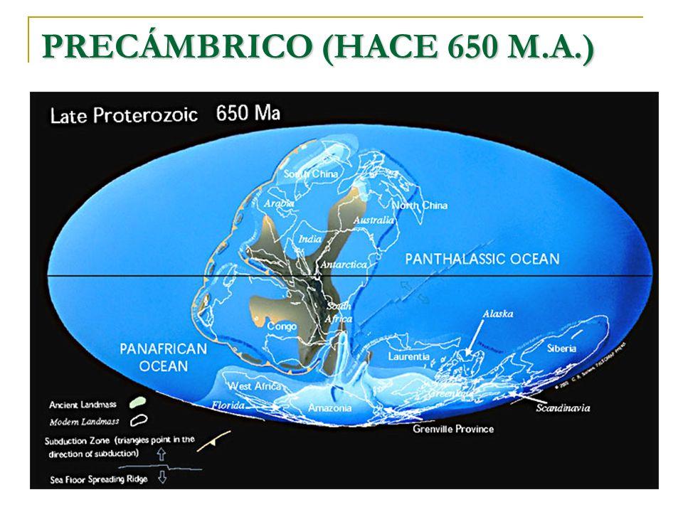 PRECÁMBRICO (HACE 650 M.A.)
