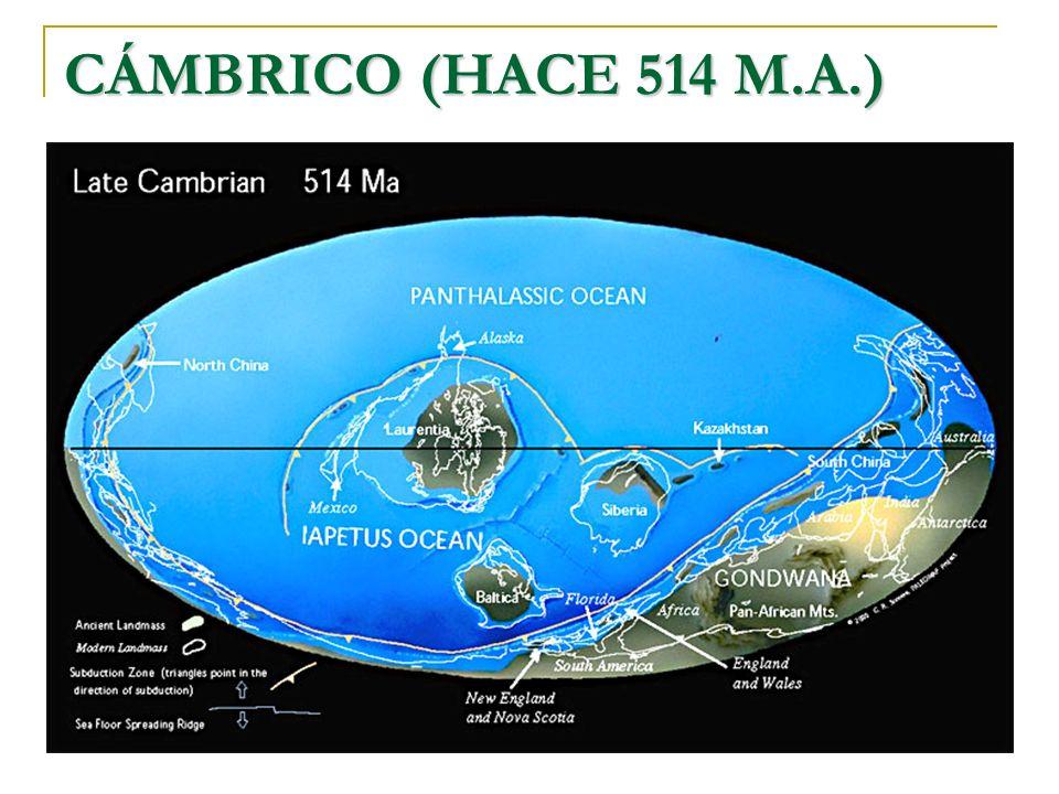 CÁMBRICO (HACE 514 M.A.)