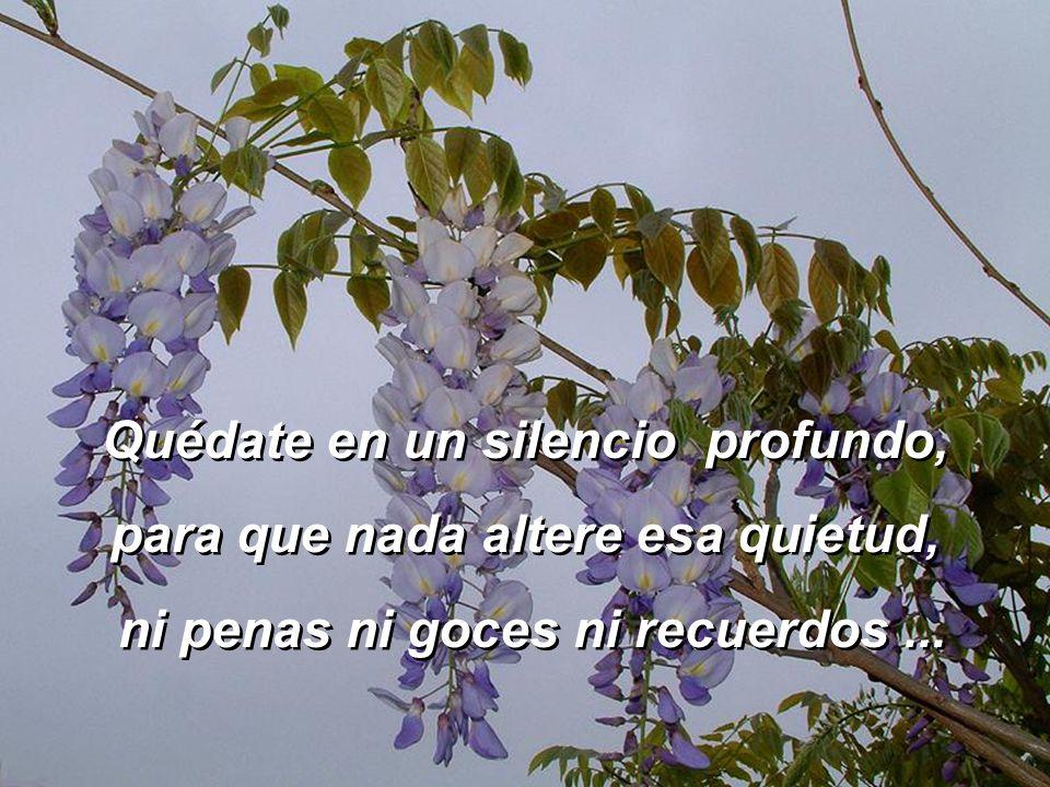 Quédate en un silencio profundo, para que nada altere esa quietud,